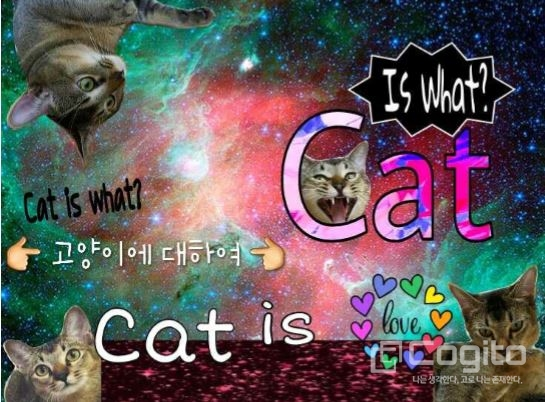 Cat is what?